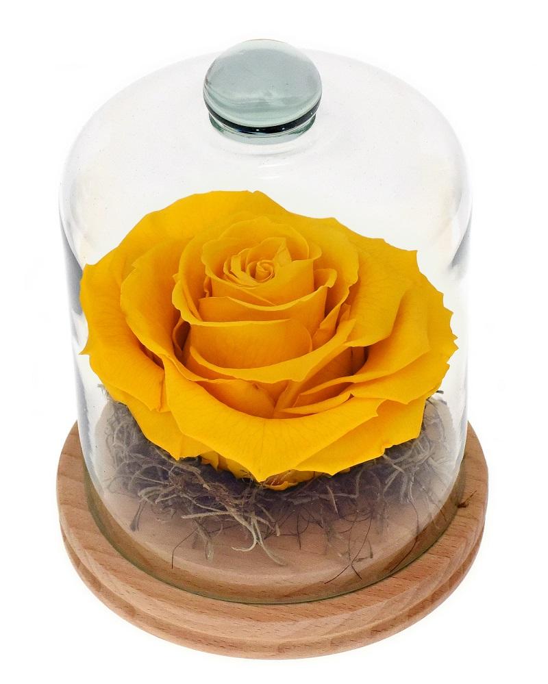 Tot ce trebuie sa stii despre trandafirii criogenati. Surprinde-i pe cei dragi cu un cadou nemuritor!
